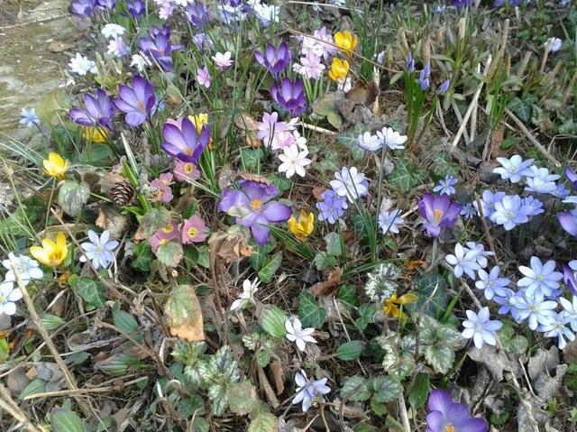 Vielfalt im Garten